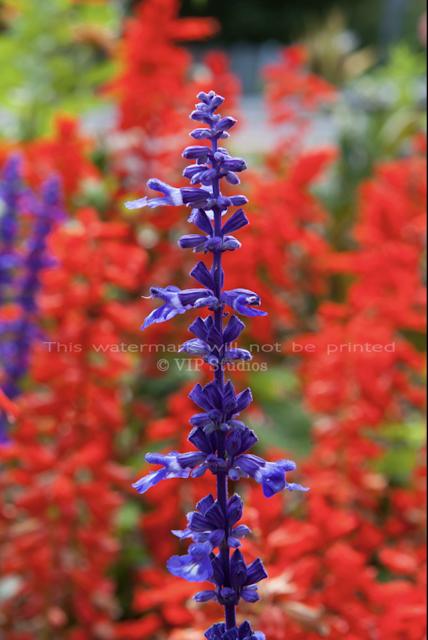 Sage _7873 Flower Print