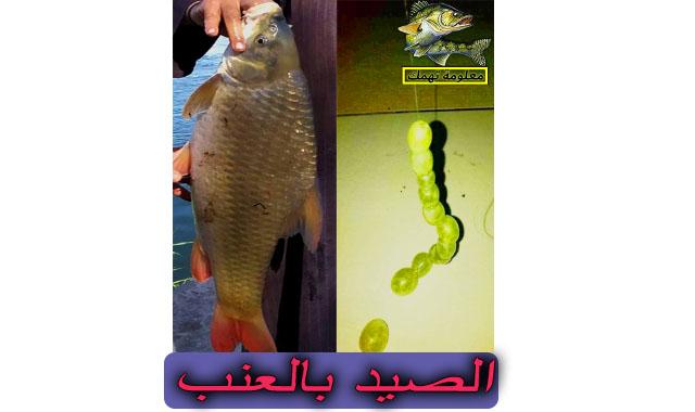 طريقة الصيد بالعنب في النيل  | صيد السمك بالعنب