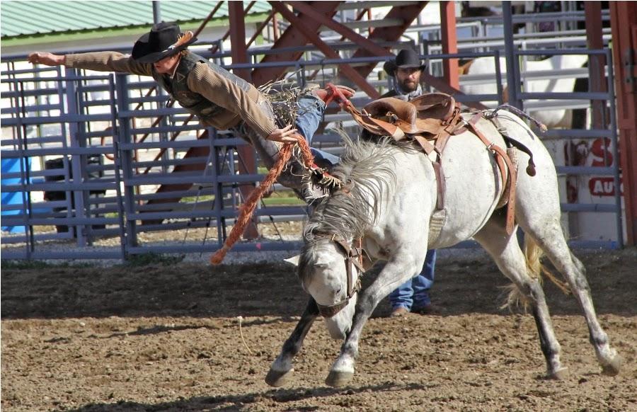 Pro Leisure Circuit Rodeo
