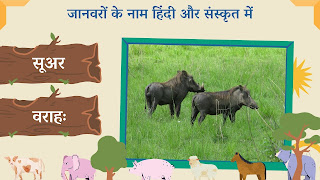 pig name in sanskrit and hindi with images