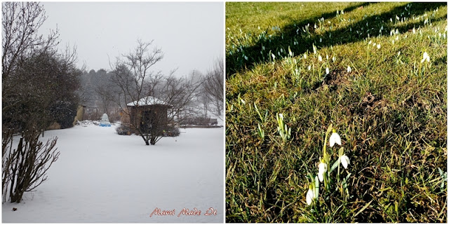 Beginn und Ende Februar - Begin and end of february