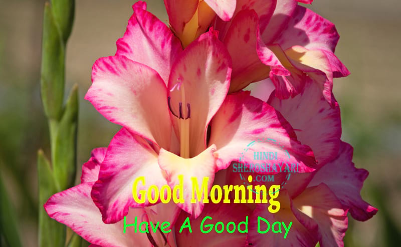 Good Morning Blessings With Gladiolus Flowers