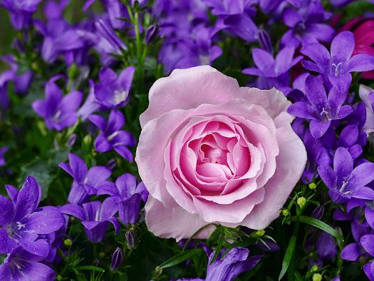 أحلى الورود ورق حائط 1