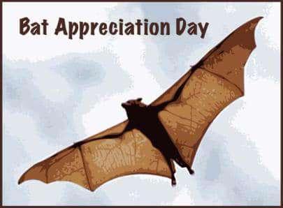 International Bat Appreciation Day Wishes