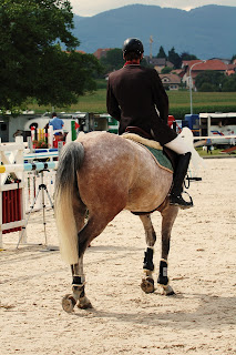A rose grey horse walking around in a show jumping competition school