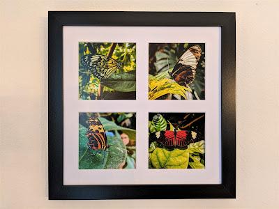 Butterflies Tetraptych by Citysqwirl