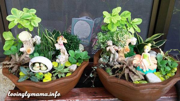 fairy dish gardens