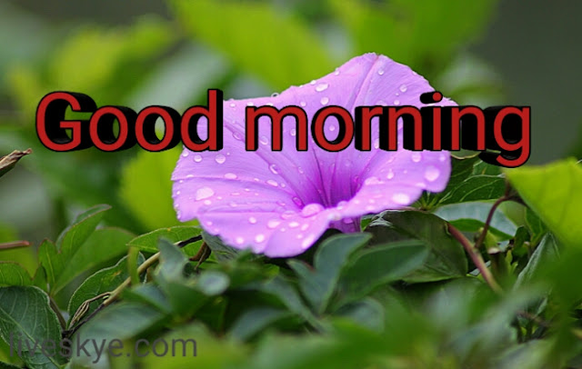 good morning imege