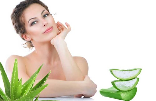 Aloe Vera | The Girls Beauty Bible