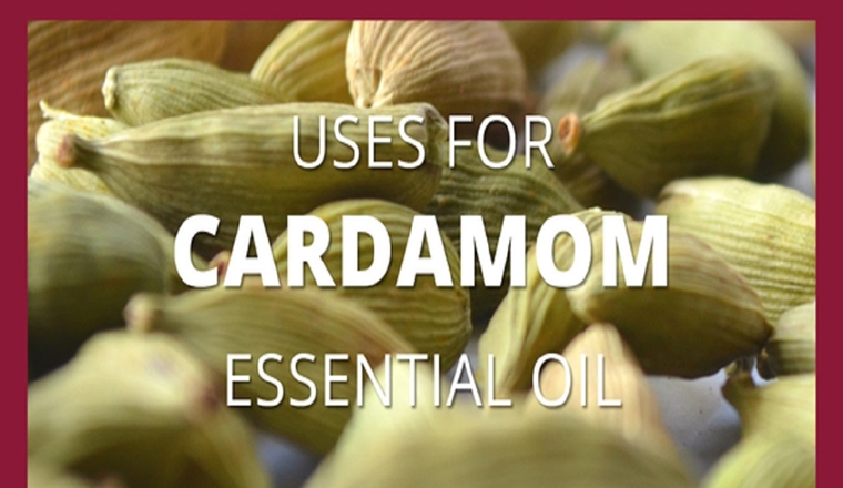 Cardamom Essential Oil – A Versatile Ancient Remedy #infographic