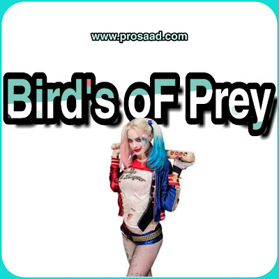 Bird's oF prey Full Review