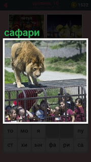 в клетке люди на сафари и сверху забрался лев