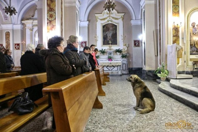 People Thought That It Was Awkward Seeing This Dog At The Church. But When They Realized The Reason Why, Everyone Was In Tears!