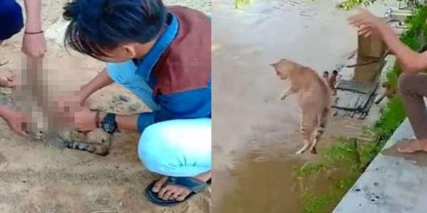 ASTAGHFIRULLOH, Para Pemuda ini Tega Sik sa Kucing yang Lagi Hamil Kemudian dilepar ke Sungai