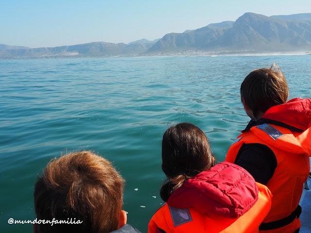 Esperando ver ballenas en Hermanus