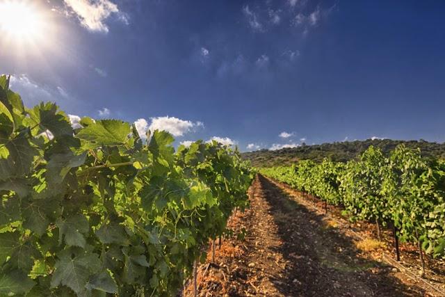 A indústria israelense de agrotecnologia
