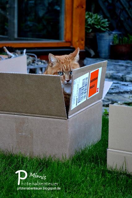 Katze Mimi schielt aus einem Karton hervor