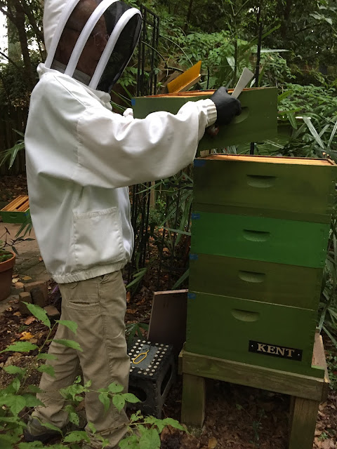 bee, beekeeping, escape, harvesting, honey, wax, foundationless. walter t kelly,