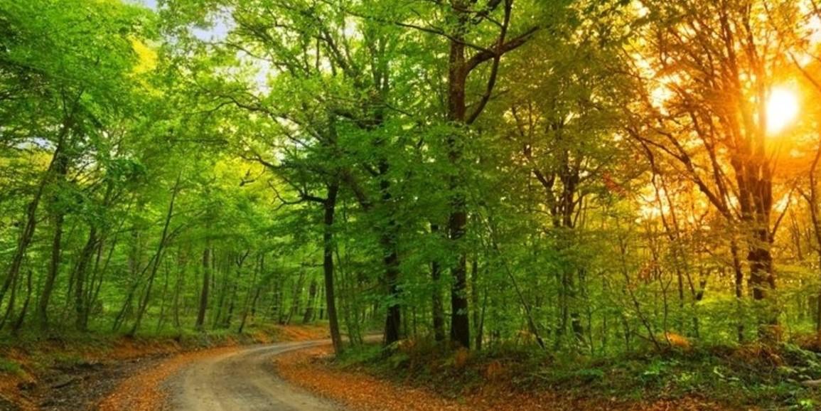 istanbul'da gezilecek yerler belgrad ormanı