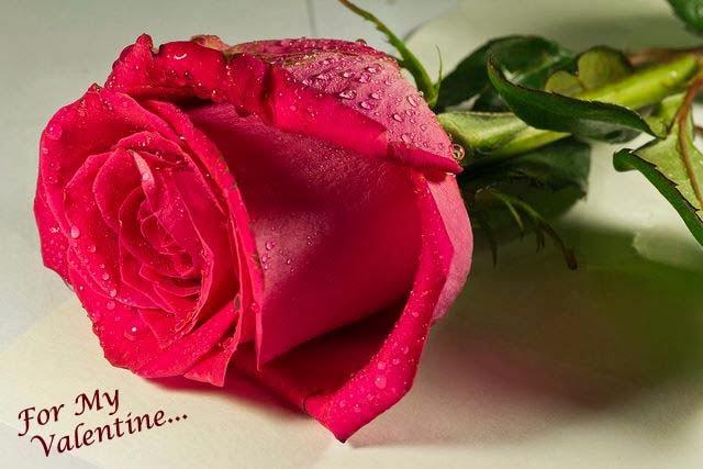 very beautiful love rose wallpaper