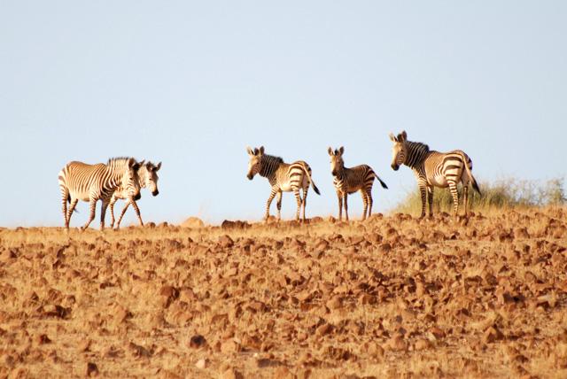 Reise namibia