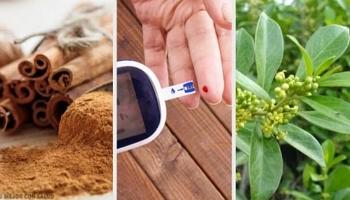 polvo de grosella espinosa para la diabetes