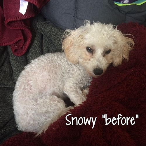 "Rescue dog Snowy ""before"""