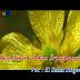 Lagu Rohani Karo Bagi Namur Erpagi Pagi - El Shadai Singer