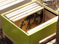 Bir arı kovanı içindeki bal çıtaları ve petek üzerindeki arılar
