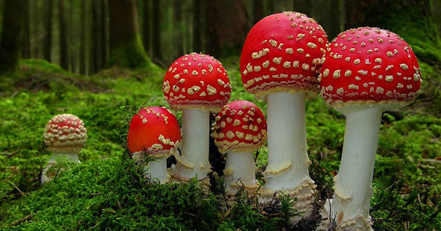Ciri Ciri Tumbuhan Fungi