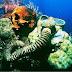 Penemuan Paling Mengejutkan Di Dasar Laut