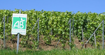 vin bio conventionnel difference degustation oenologie blog beaux-vins