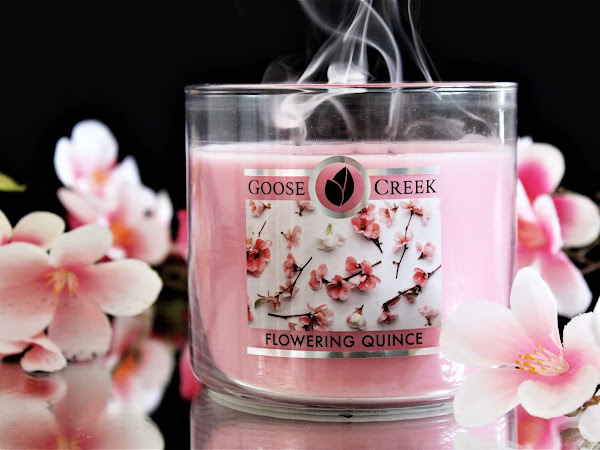 GOOSE CREEK | FLOWERING QUINCE - AVIS