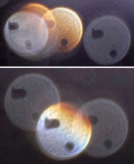 shapes inside orbs