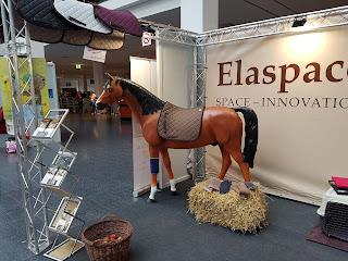 Elaspace Pferd Bodensee