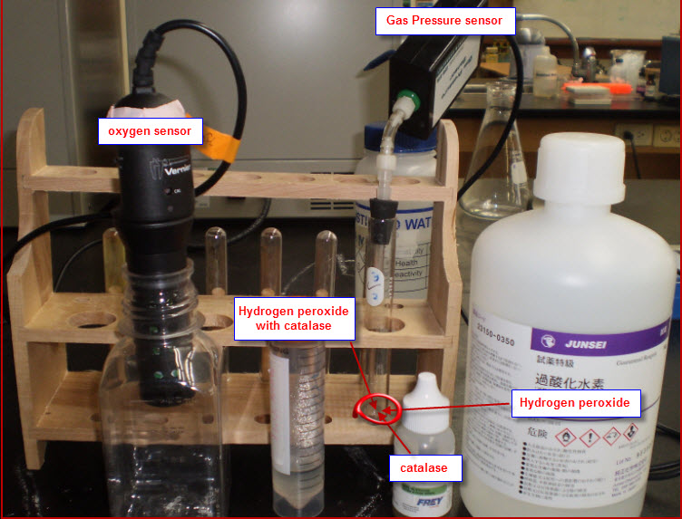 Decomposition of hydrogen peroxide coursework