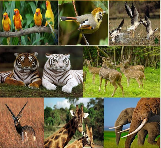 Gujarat Wildlife Tours