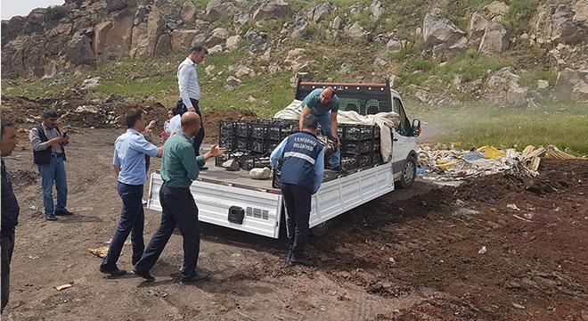 Diyarbakır'da 1 buçuk ton balık imha edildi
