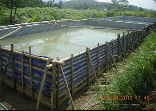 Syarat Kolam Ikan Lele