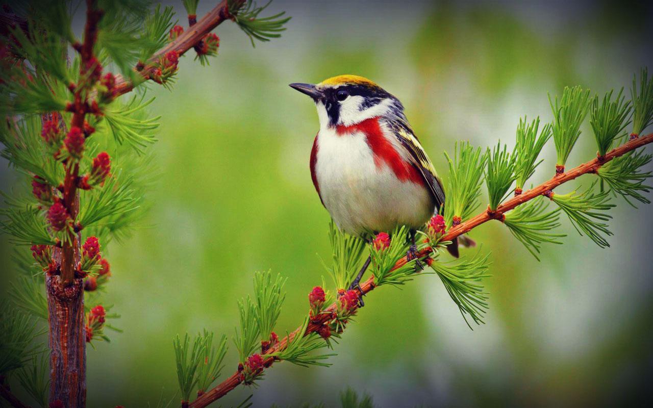 hd vogel wallpaper met - photo #40