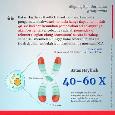 Batas Hayflick (Hayflick Limit)