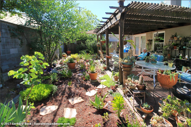 Succulents And More Linda S Sacramento Backyard Succulent Garden