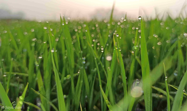 Mobile-photography_dew-drops