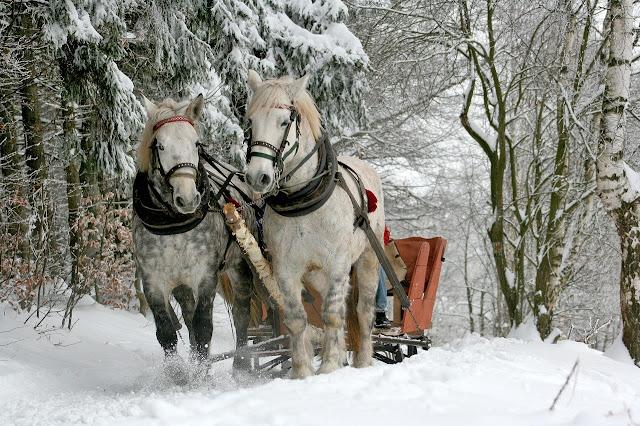 أجمل صور للجليد مع الخيول