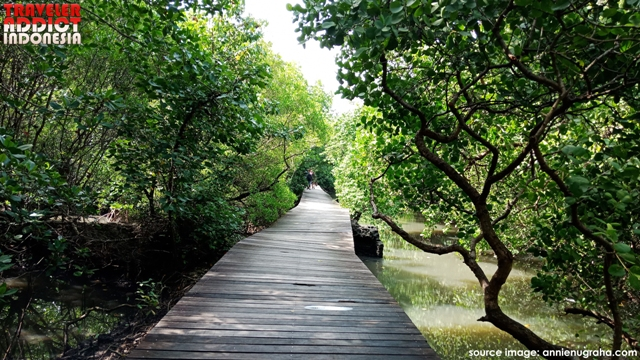 Holidays to Bali do not have to be a beach trip. In Denpasar, there is a tour of mangrove forests that can be an alternative destination full of education