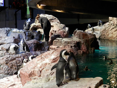 visite du New England Aquarium Boston