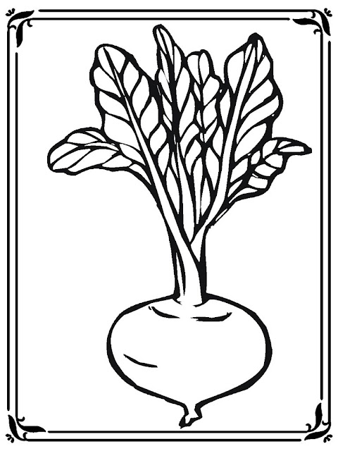 coloring pages of turnip