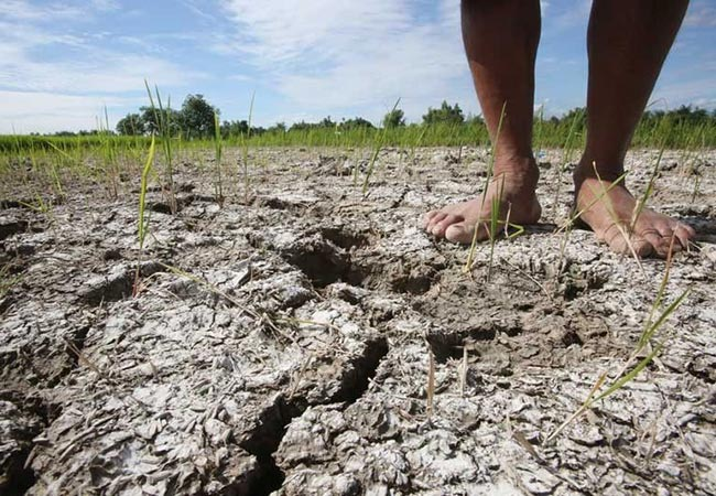 Penelitian UN Agency Says High Chance of El Nino But Strong by end of 2018