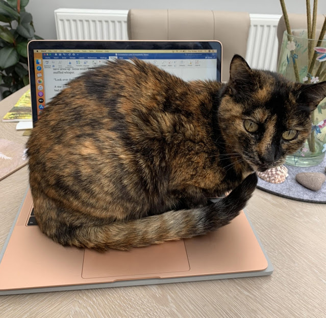 A black-and-orange tortoiseshell cat sits on the keyboard of an open laptop. It's Hannah Gold's cat and she told me all about her upcoming book