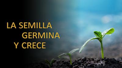 Evangelio según san (Marcos 4, 26-34): La semilla germina y crece